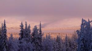 Pallastunturi. Wikimedia Commons: Simo Räsänen