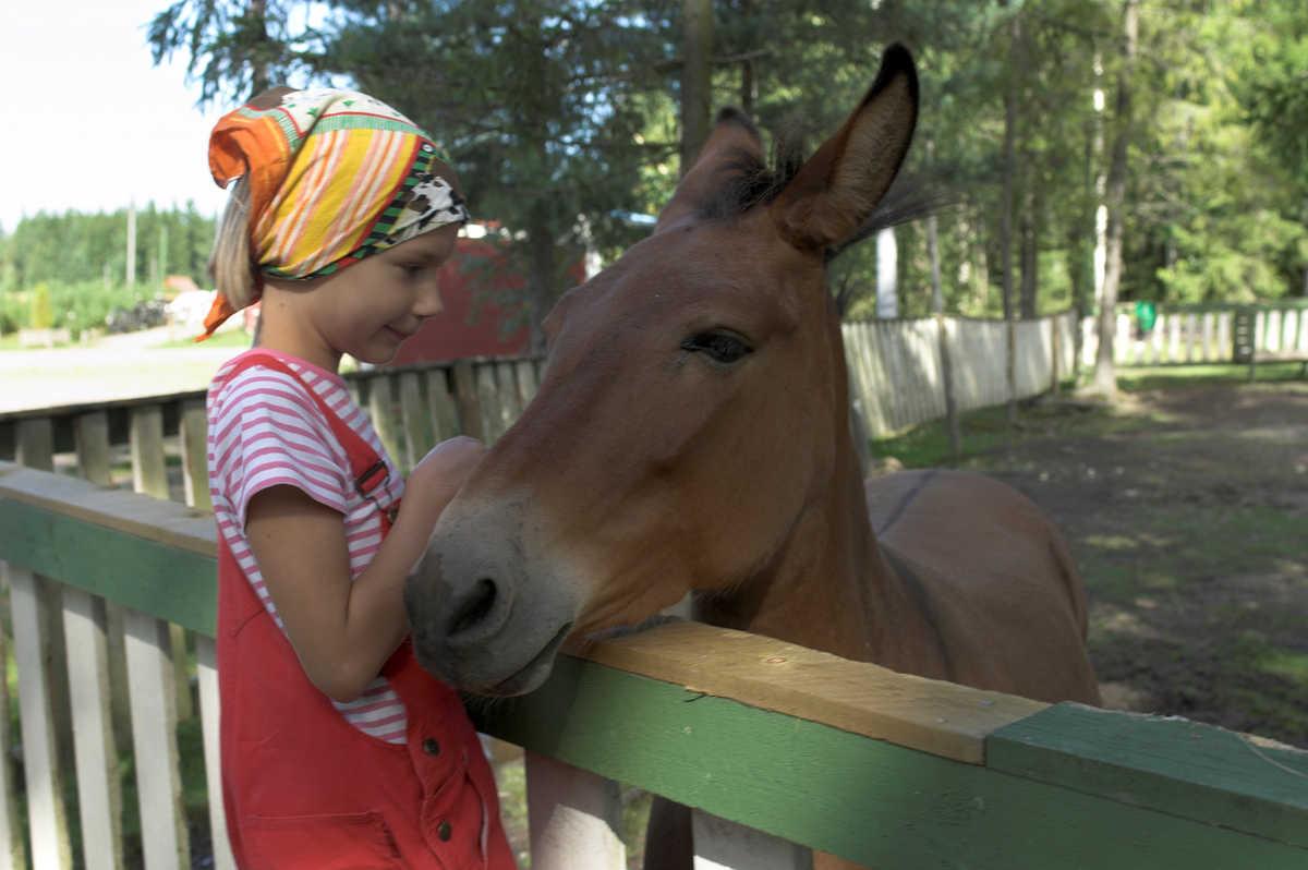 Orimattilan kotieläinpuistossa voit tavata muulin ja monia muita eläimiä.