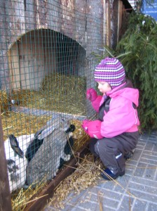 Lintsi talvella 2010