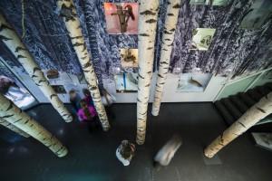 Kuopion museossa on kiehtova luonnontieteellinen perusnäyttely. (Kuva: Janne Voutilainen / Kuopion luonnontieteellinen museo)