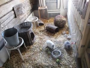 Koiramäen Pajutallin suloiset kanit.