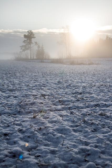 Peltomaisema puolen päivän aikaan, Jalasjärvi. Kuva: Niko Saarinen Photography