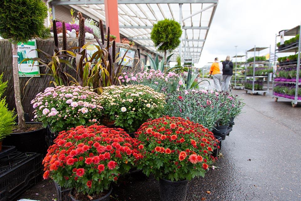 Taimisto aukeaa huhtikuussa, mutta sisämyymälässä on täysi kesä ympäri vuoden. Kuvan lähde: Pirilän Kukkatalo